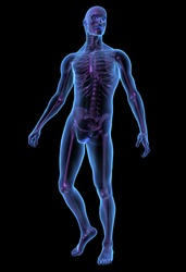 X-ray illustration of male human body and skeleton. 3D render.