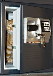 Open safe door with keys hanging on front and orange tabby cat inside