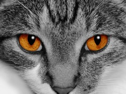 Close-up of a cat's face with selective coloring of her bright orange eyes.