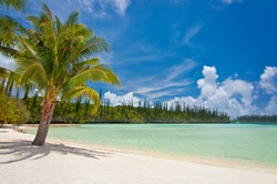 Palm tree on a tropical beach, Isle of Pines, New Caledonia