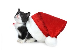 cute kitten with red santas hat