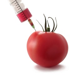 Gmo product concept: Tomato injection