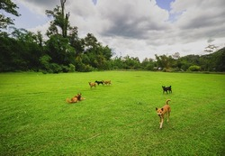 herd dogs on grass