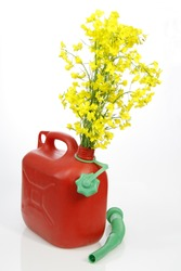 Red jerrycan with rapeseed over bright background