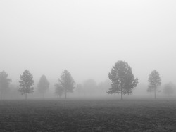 An early morning foggy view of this field with trees in Thompson Grove Park in Manalapan, New Jersey in black and white.