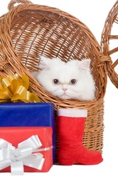 white kitten in the rattan carrier and some gift  box