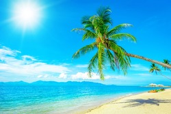 Beach, palms and ocean. Holidays and vacation concept.