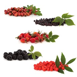 Wild fruit collection of hawthorn, elderberries, rosehips, blackberries and rowan berries, isolated over white background. Top to bottom.