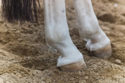 Rear Feet and tail of a horse in the sand