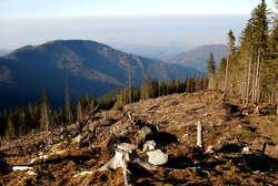 Deforestation in Carpathian Mountains