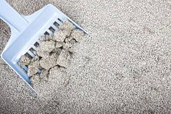 Clumping Bentonite  Cat Litter on blue scoop