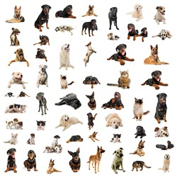 pets on white background