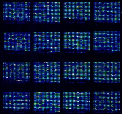 DNA microarrays are used in biological research.