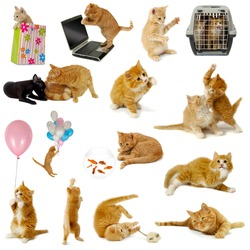Cat collection isolated on white background. The cats are with laptop, dog, balloons, goldfish and mouse.