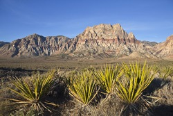 Red Rock Nevada sandstone and Yuccas in warm early morning light.