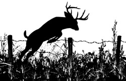 Silhouette of a Whitetail Buck Deer Leaping a Barbed Wire Fence