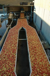 apple processing and packing