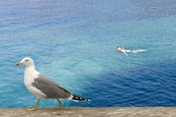 Seagull and swimmer