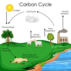 Bunny on it the carbon cycle diagram all kind of wiring diagrams similar images stock photos vectors of education chart biology rh shutterstock com carbon cycle diagram for ccuart Choice Image