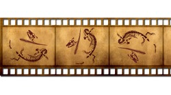 Fossils in the old film.