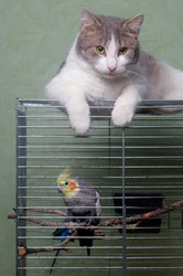 guard cat and parrot