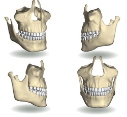 jaw vector in four different positions