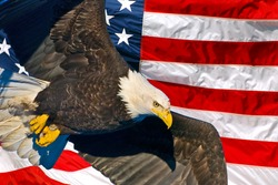 american bald eagle in flight superimposed over usa flag