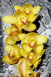 Close up beautiful yellow orchids on wet black background