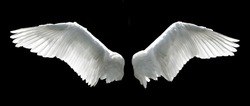 Angel wings isolated on the black background.