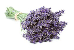Bunch of dried Lavender flowers (Lavandula angustifolia), isolated