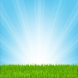 Field of Grass, Vector Illustration