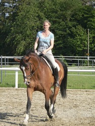 frontal shot of a horse riding woman on a parcours in sunny ambiance