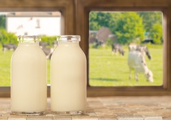 Two bottles of fresh milk with a field of cows outside the window