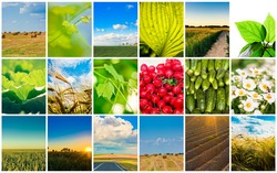 Agricultural set. Agriculture or harvest collage / Harvest concepts. Cereal collage
