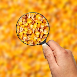Food control, corn seed quality in focus