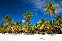 Beautiful caribbean beach on Saona island