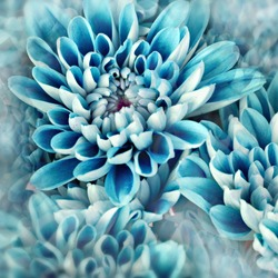 photo illustration of abstract flower petals in blue