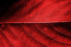 Red dried leaf texture.