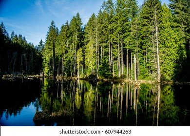 Redmond Watershed: A pond in the Redmond watershed.
