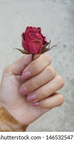 A redrose flower holding in hand
