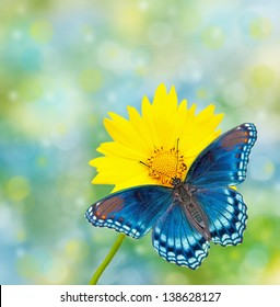 Red-spotted Purple Admiral on yellow Coreopsis flower, against dreamy blue and green bokeh background