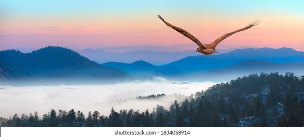 Red-tailed Hawk flying over the blue mountains with sunset sky