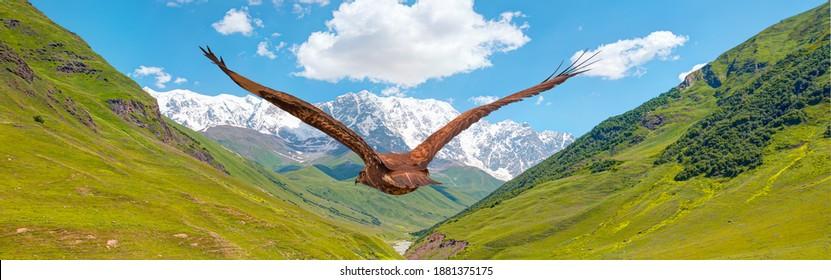 Red-tailed Hawk flying over the mountains with sky background - Beautiful landscape with Mount Shkhara, Ushguli village  Upper Svaneti, Georgia
