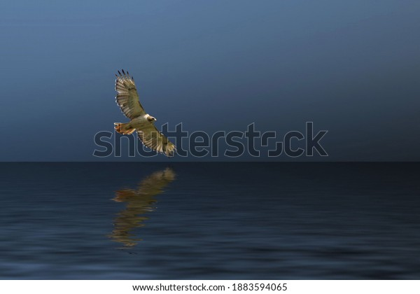 https://image.shutterstock.com/image-photo/redtailed-hawk-glides-over-lake-600w-1883594065.jpg