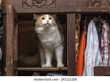 Red-white cat in old closet proudly stands