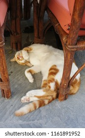 Red-white street cat sleeping on the back between wicker chairs of Corfu cafe