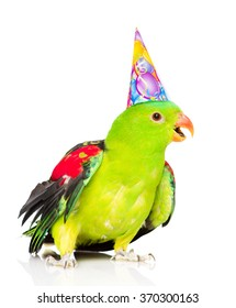 Red-Winged Parrot  in birthday hat looking at camera . isolated on white background
