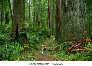 Redwood, California