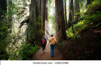 REDWOOD FOREST, CALIFORNIA/USA - DECEMBER 3, 2017: Male and Female hiker walking through giant redwood forest.