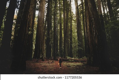 REDWOOD FOREST, CALIFORNIA/USA - NOVEMBER 30, 2017: Female hiker exploring through the Redwood Forest State Park.